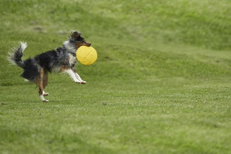 How To Teach Dogs To Play With Toys?